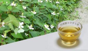 自家製どくだみ茶の作り方と保存方法。花の咲いている5月~6月に作って一年中飲んでいます!