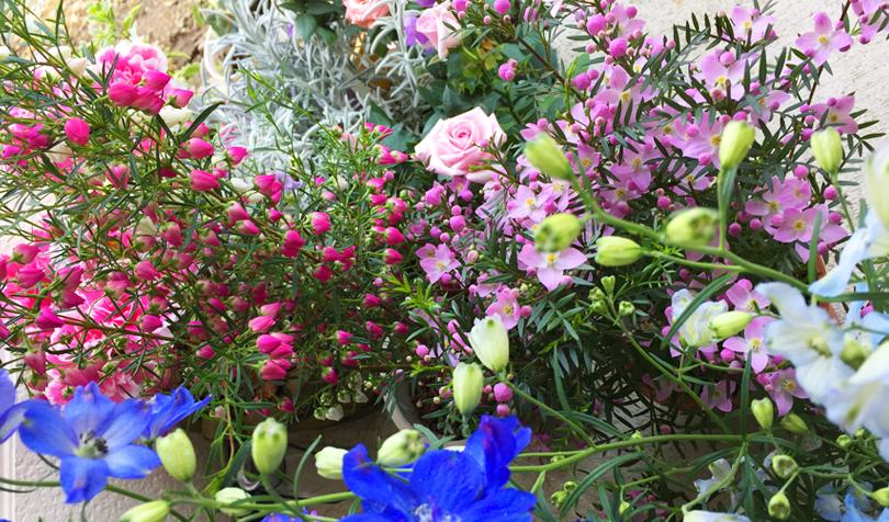 春に買った花