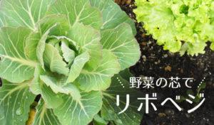 野菜の芯でリボベジ