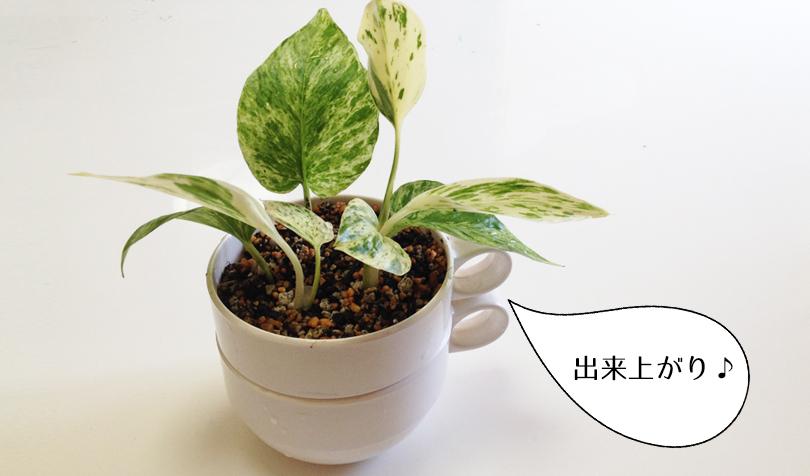メラミンカップの植木鉢
