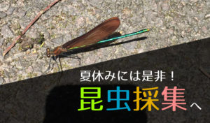 【夏休み】昆虫採集の初心者が注意すべきことは?押さえておきたい知識と便利道具10選