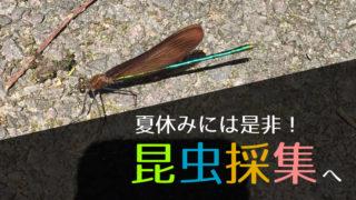 昆虫採集におすすめの道具と注意点