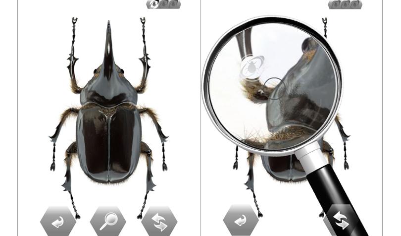 世界の昆虫採集の画面2