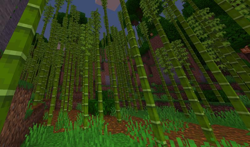 密集した竹