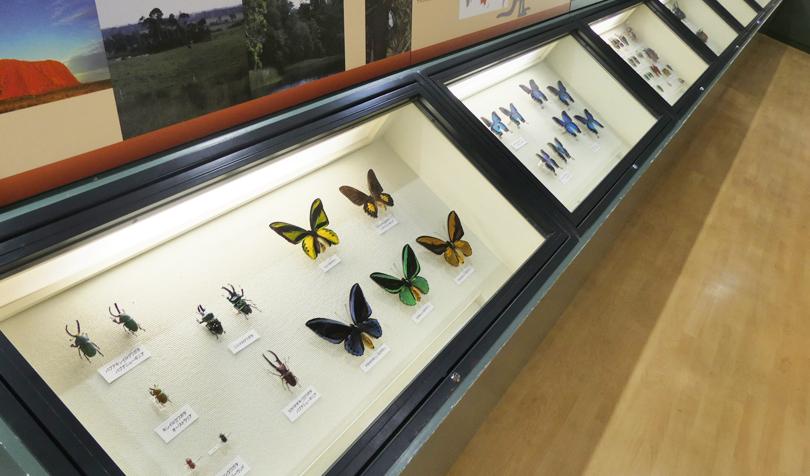 世界の蝶々