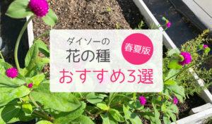 ダイソーの花の種3選
